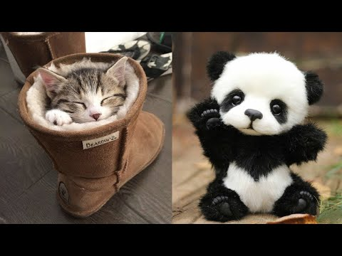 Baby Animals 🔴 Funny Cats and Dogs Videos Compilation (2020) Perros y Gatos Recopilación #3