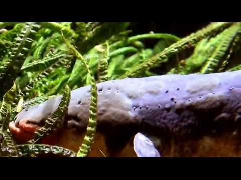 Eel Facts: 9 facts about Electric Eels