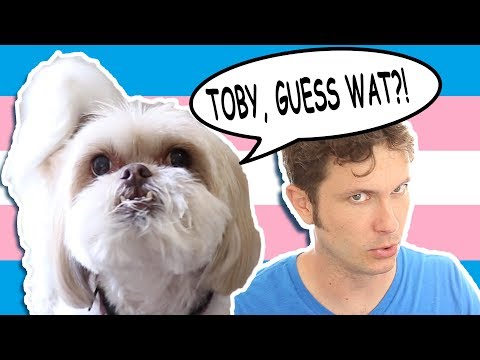 MY DOG IS TRANS (Toby & Gryphon)