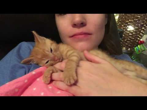 Cuddling with my Baby Kitten Nutmeg!