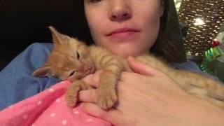 Cuddling with my Baby Kitten Nutmeg! thumbnail