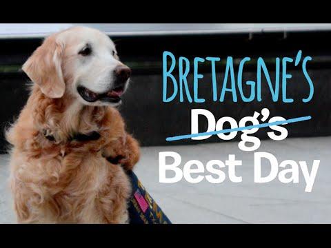 Dog's Best Day - Bretagne