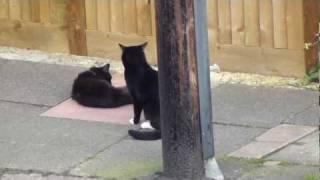 CATS HAVING FUN