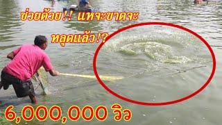 #คำเตือน!!!แหไม่ดีอย่าเอามาบ่อนี้!?หว่านแห 1,500 เจอลากทั้งคนทั้งแหทั่วทั้งบ่อ!?
