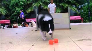 Waggie Dog Training Video Singapore - trailer
