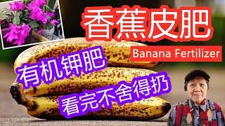 香蕉皮有机肥最全的制作方法看完都不舍得扔 | Banana Peel Fertilizer (Easy and quick点CC打开字幕English subtitles)