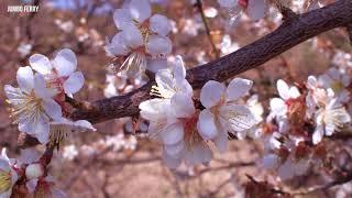 ジャンボフェリー「こんぴら2」と春が近づく小豆島