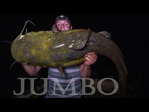 JUMBO Flathead Catfish: Mississippi River, Minnesota - Northwoods Angling