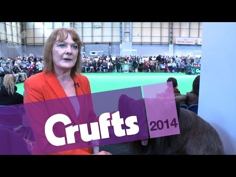 Skye Terrier | Best of Breed | Crufts 2014