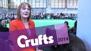 Skye Terrier | Best of Breed | Crufts 2014