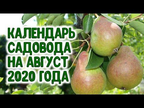 КАЛЕНДАРЬ САДОВОДА НА АВГУСТ 2020 ГОДА. Агропрогноз для садоводов | черенкование | многолетники | агрогороскоп | многолетние | маленький | горяченко | своими | руками | летний | цветы