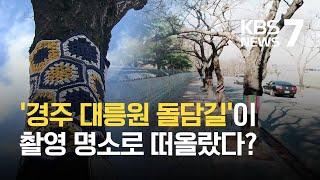 털옷 입은 돌담길 가로수…나무도 겨울 채비 / KBS