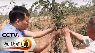 《生财有道》 20190614 河南伊川:多管齐下助脱贫| CCTV财经