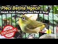Pleci Betina Ngecir  Mp3 - Mp4 Download