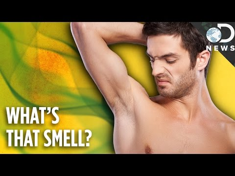 Why Do We Have Such Bad Body Odor?
