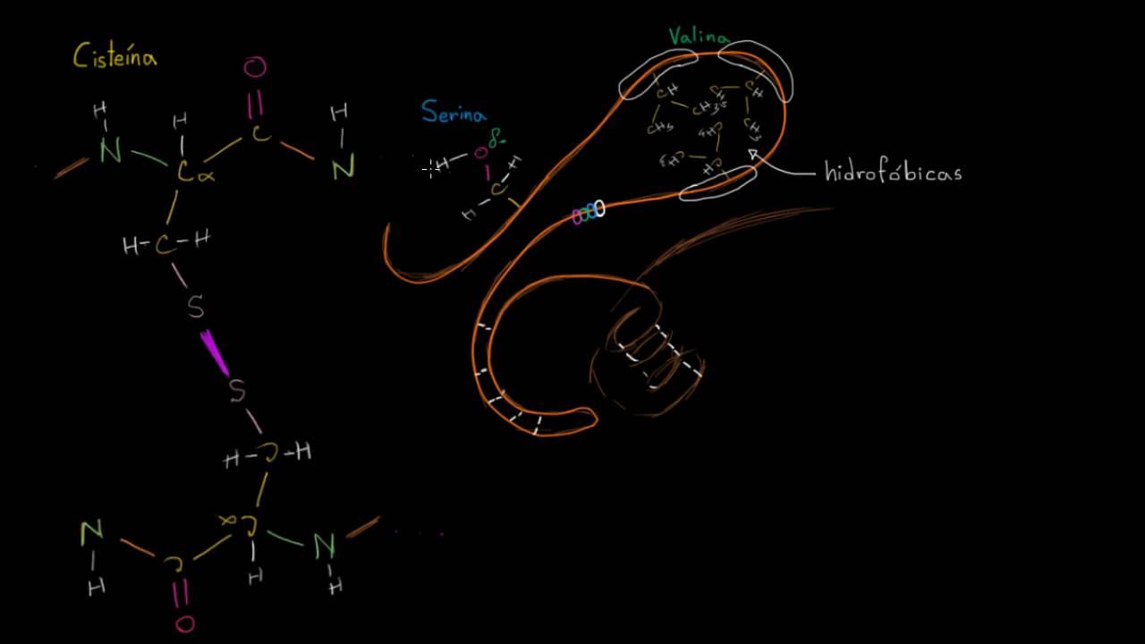 Estructura Terciaria De Las Proteínas Macromoléculas Biología Khan Academy En Español