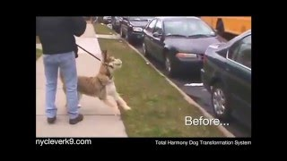 Extreme Aggressive Dog Training!christina Shusterich Ny Clever K9