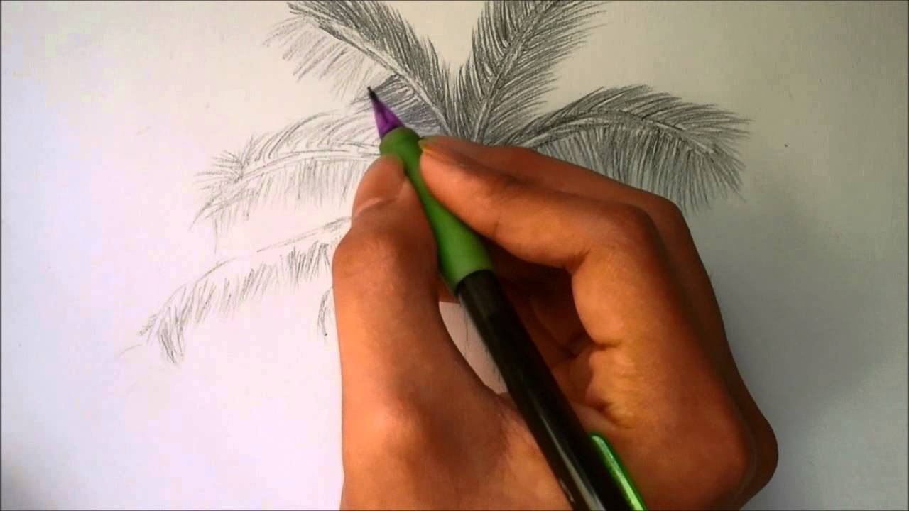 Uncategorized How To Draw A Palm how to draw a palm tree youtube