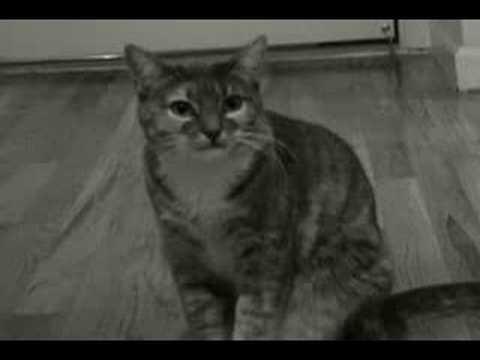 Best Cat Video Ever