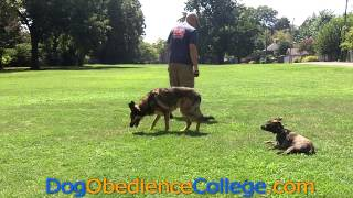 Delta Training Session Dog Obedience College Memphis