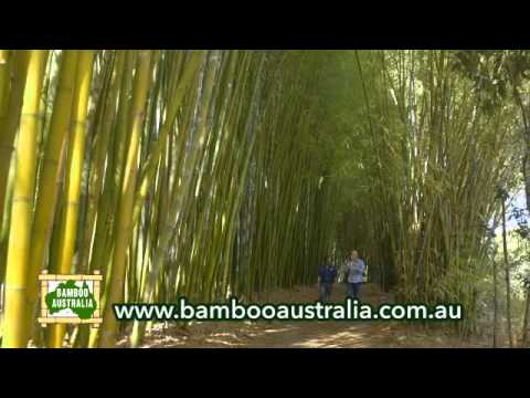 Bamboo Australia » About Us