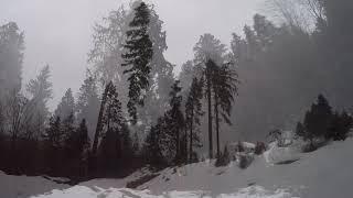 Sturm Burglind im Schwarzwald