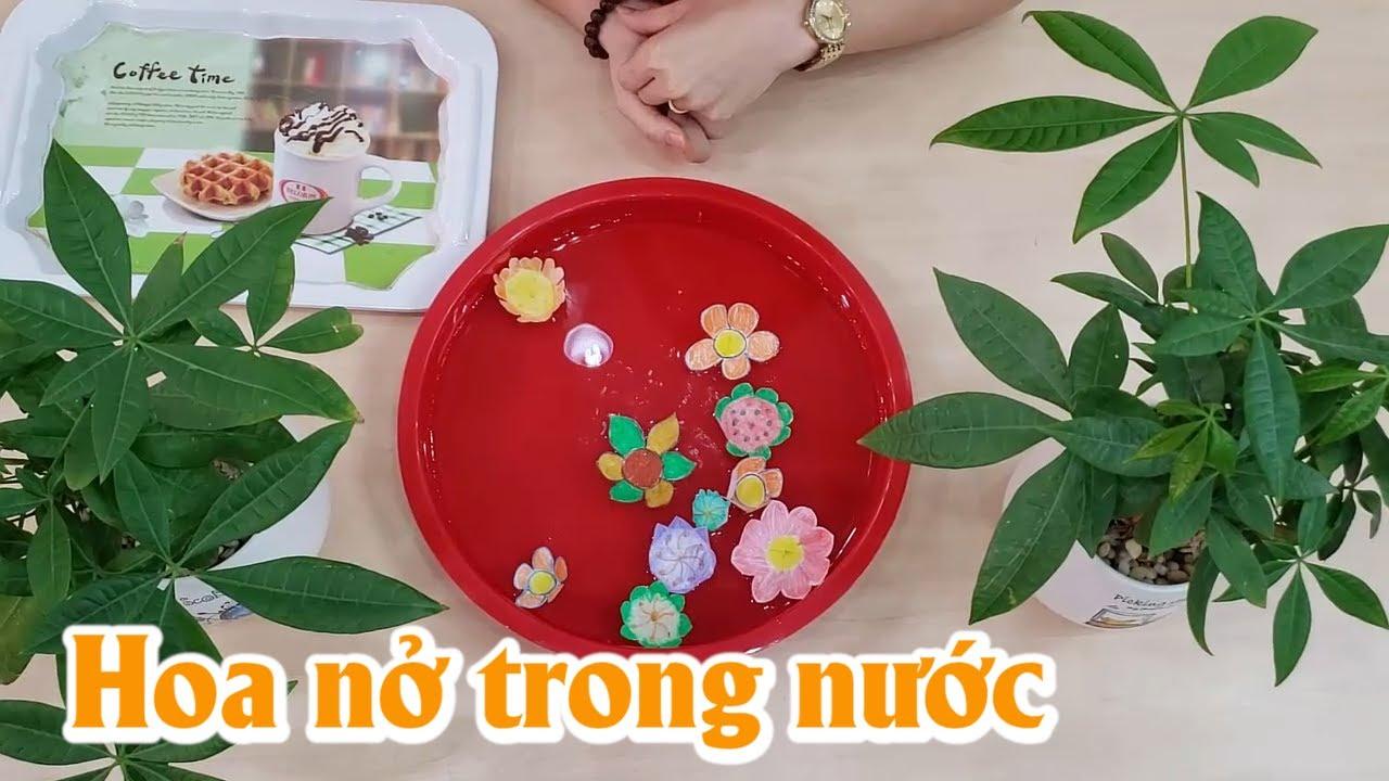 Hoạt động quan sát hoa nở trong nước – Trường Mầm Non Thực Hành Hoa Hồng