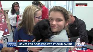 Homes for Dogs holds event in Carmel