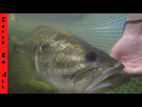 UNDERWATER LIVE FEEDING Catch em All Fishing MONSTER FISH Pets