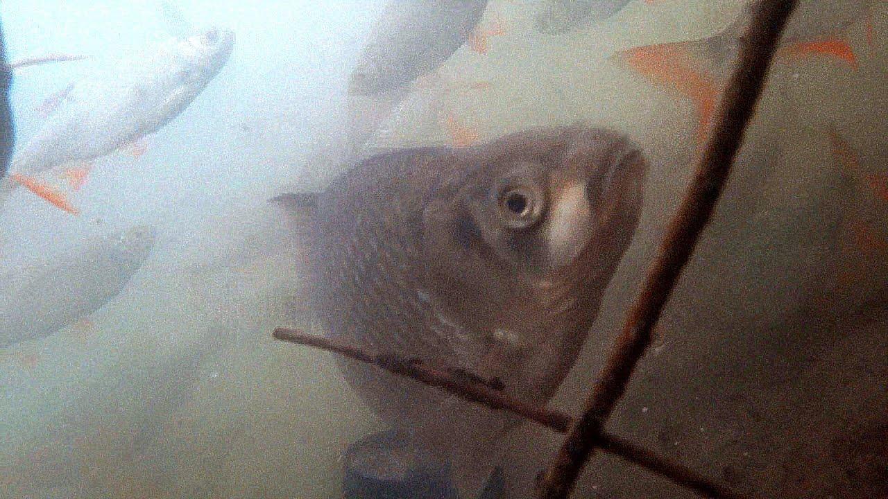 ЭТА Прикормка Собирает ВСЮ Рыбу! Рыбалка и Подводная съемка