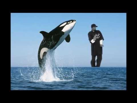 Snoop Whale