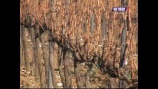 Repeat youtube video Prilog o tome kako da pravilno orezete vinograd