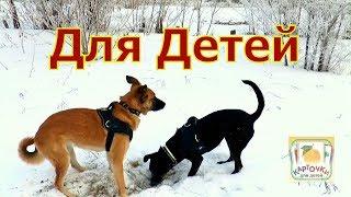 Карточки для детей - Собаки на прогулке - Животные для детей