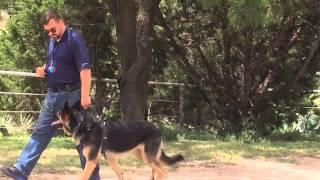 Dog Training Abilene, Texas