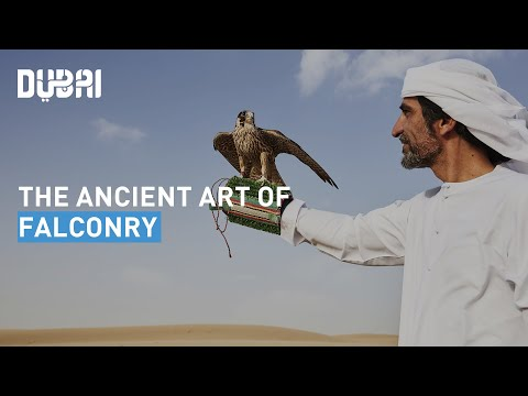 Art Of Falconry In Dubai