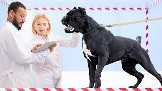 10 Dog Breeds that Are Created Specifically for Fighting