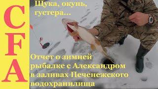 Отчет о зимней рыбалке с Александром в заливах Печенежского водохранилища щука, окунь, густера