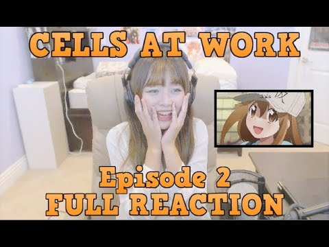 Hataraku Saibou Episode 2 LIVE FULL REACTION!!
