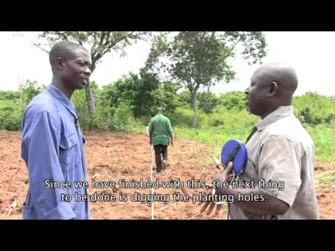 Establishment of Cashew Farm Training Movie_ACi