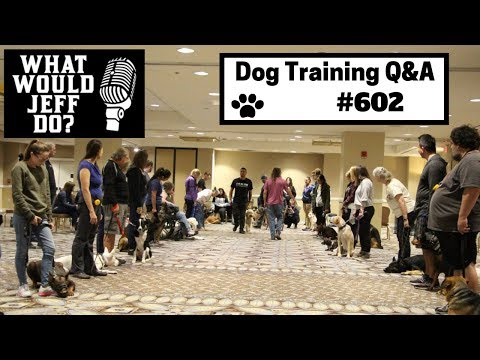 dog-training---nervous-dog---stop-dog-barking---what-would-jeff-do?-q&a-ep.602-(2019)