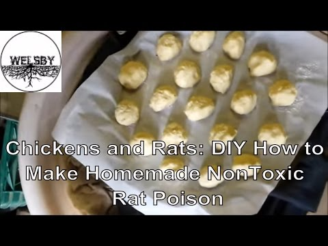 Chickens And Rats: DIY How To Make Homemade NonToxic Rat Poison