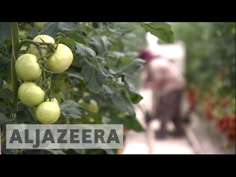 Turkish farmers affected by Kremlin's sanctions