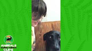 Dog Lovebite Fail | Animals Doing Things
