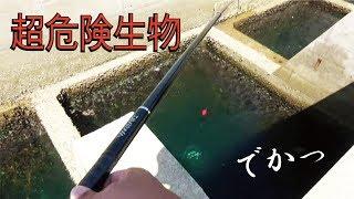超穴釣りで危険な魚が出てきた! thumbnail