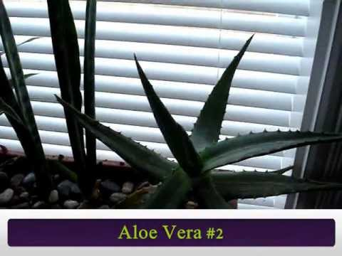 indoor tropical house plants collection 50 types all labeled