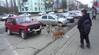 Собака бывает кусачей... от жизни СОБАЧЕЙ! И в Красном Сулине тоже... Видео Леонида Калина