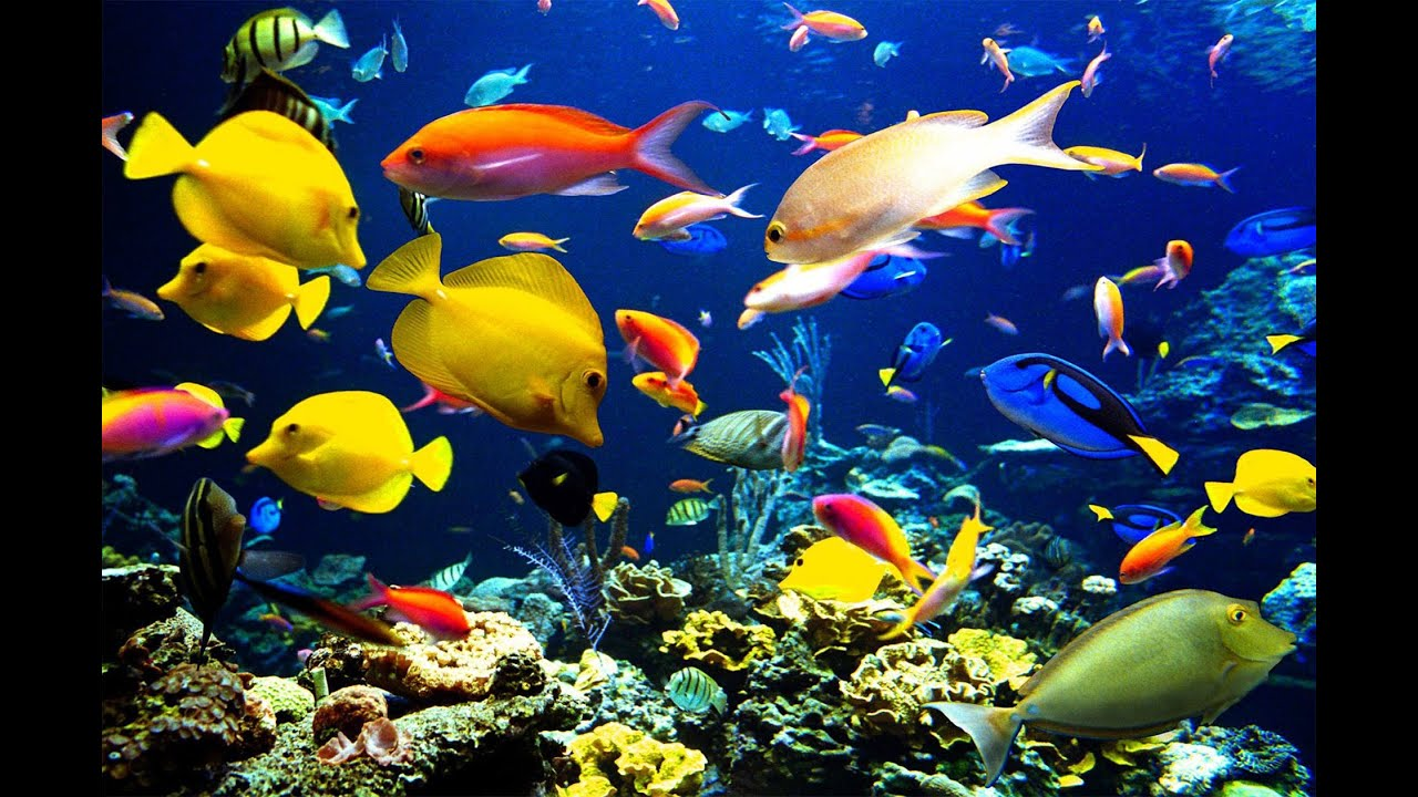 Qu significa so ar con peces sue o significado youtube - Bruguer colores para sonar ...