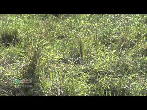Weed Control In Pastures #675 (Air Date 3/13/11) - YouTube