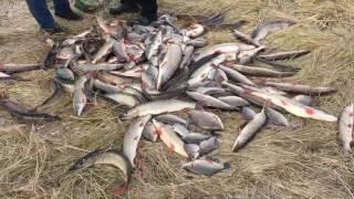 Рыбалка на убагане костанай