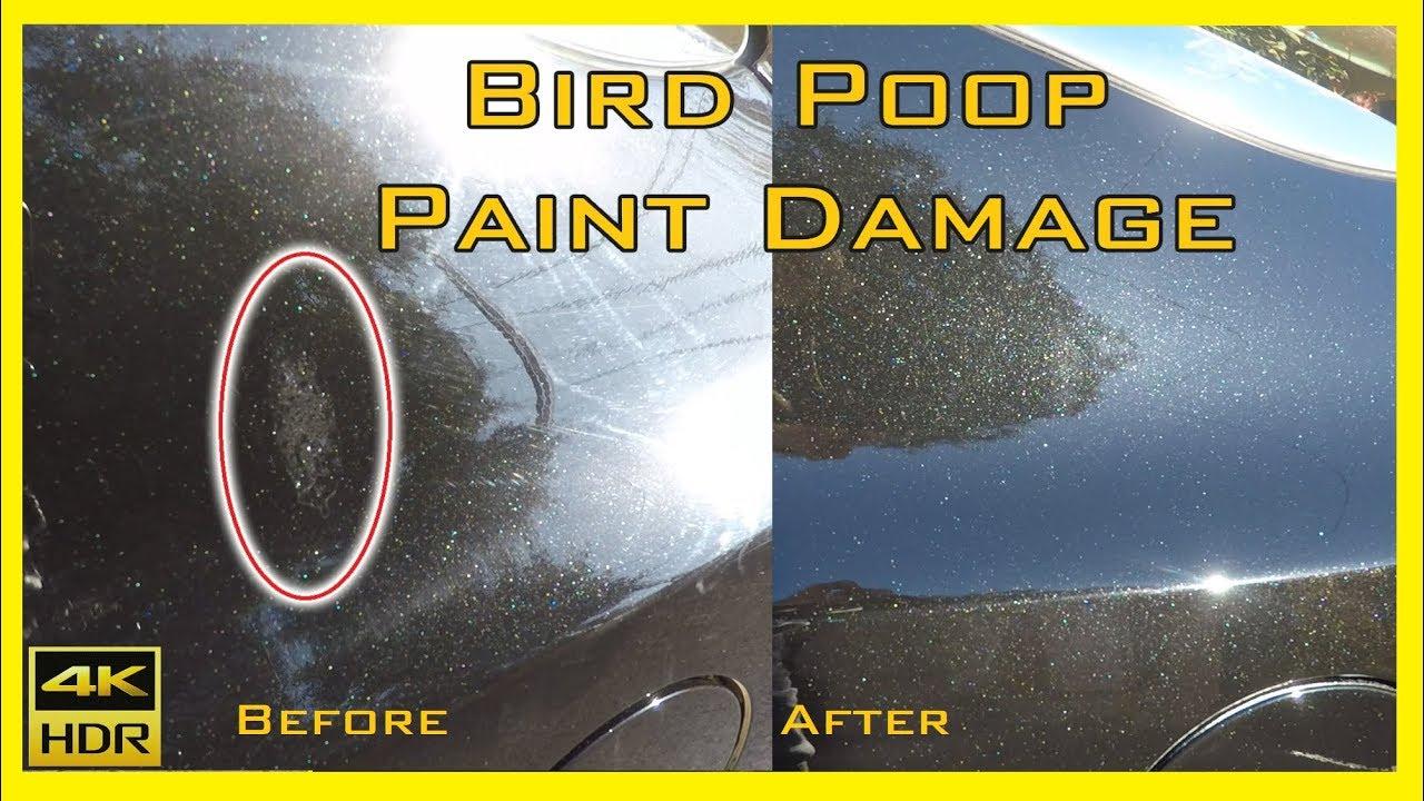 Bird Poop Paint Damage